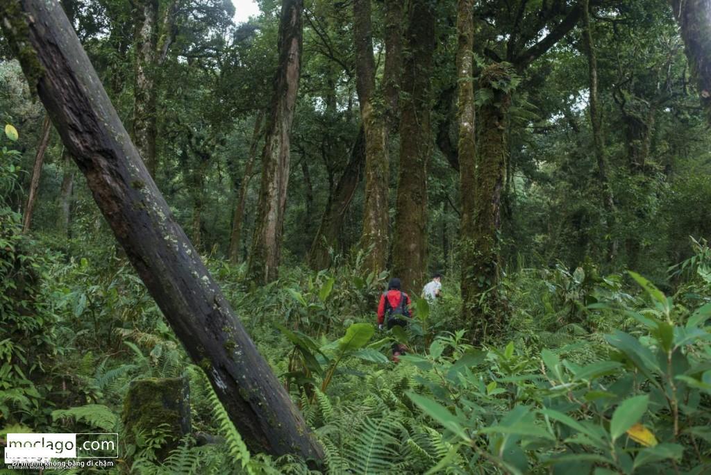 BAC0292 1024x684 - Những đỉnh núi đẹp nhất Việt Nam| Phần 1| Pờ Ma Lung - Vườn địa đàng bị lãng quên