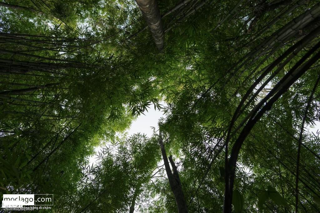 BAC8981 1024x683 - Những đỉnh núi đẹp nhất Việt Nam| Phần 1| Pờ Ma Lung - Vườn địa đàng bị lãng quên