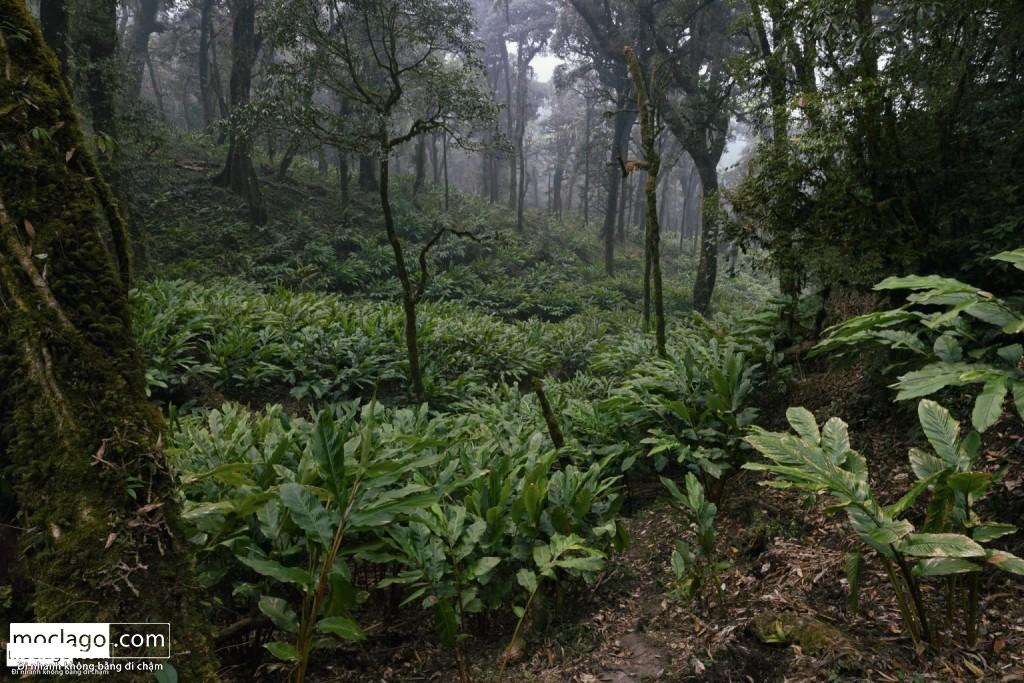 BAC9012 1024x683 - Những đỉnh núi đẹp nhất Việt Nam| Phần 1| Pờ Ma Lung - Vườn địa đàng bị lãng quên