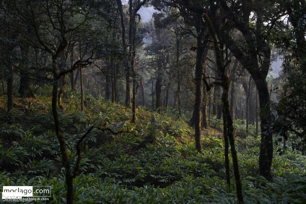 BAC9246 1024x683 - Những đỉnh núi đẹp nhất Việt Nam| Phần 1| Pờ Ma Lung - Vườn địa đàng bị lãng quên