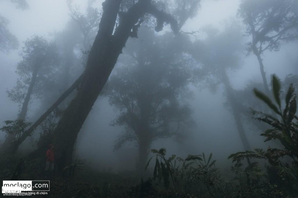 BAC9293 1024x683 - Những đỉnh núi đẹp nhất Việt Nam| Phần 1| Pờ Ma Lung - Vườn địa đàng bị lãng quên
