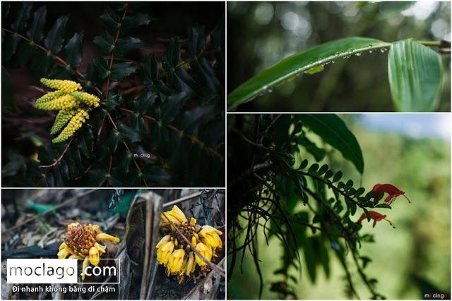 cay - Những đỉnh núi đẹp nhất Việt Nam| Phần 1| Pờ Ma Lung - Vườn địa đàng bị lãng quên