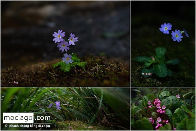 hoa - Những đỉnh núi đẹp nhất Việt Nam| Phần 1| Pờ Ma Lung - Vườn địa đàng bị lãng quên