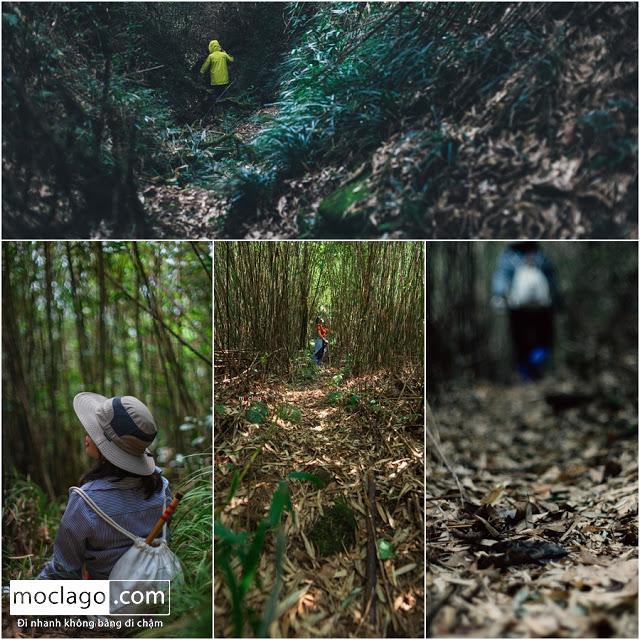 rung - Những đỉnh núi đẹp nhất Việt Nam| Phần 1| Pờ Ma Lung - Vườn địa đàng bị lãng quên
