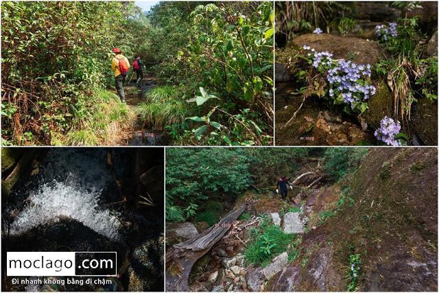 suoi2 - Những đỉnh núi đẹp nhất Việt Nam| Phần 1| Pờ Ma Lung - Vườn địa đàng bị lãng quên
