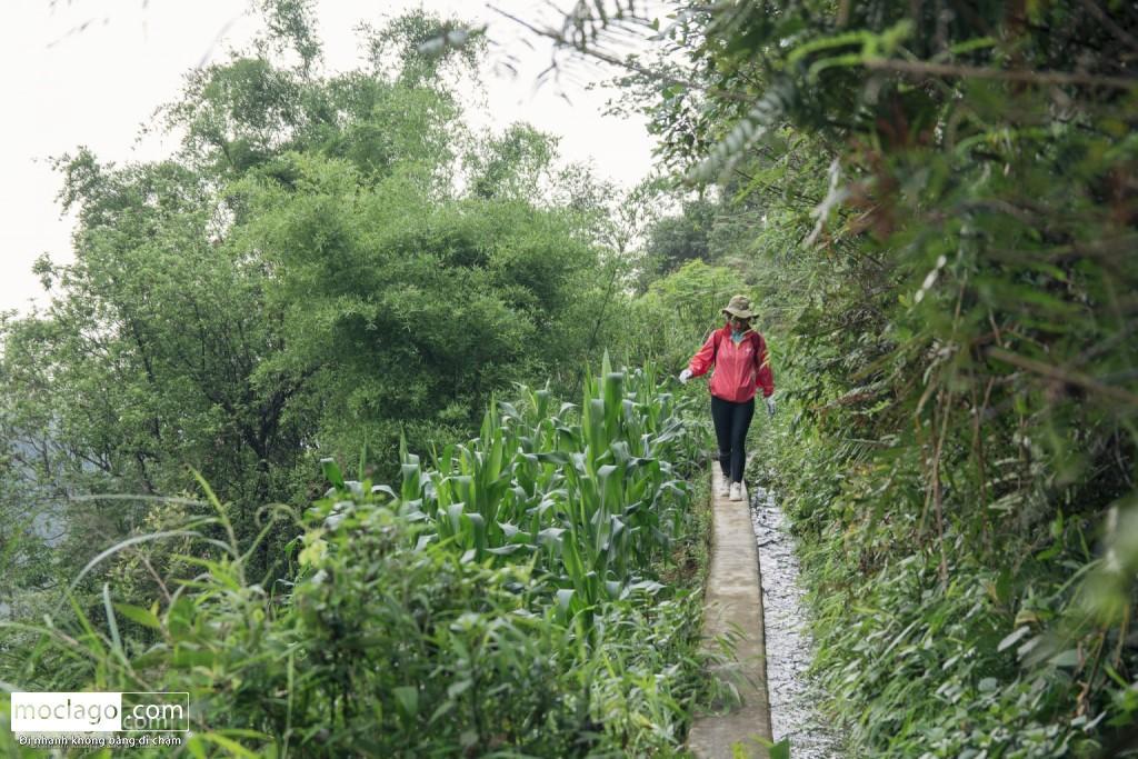 putaleng 21 1024x683 - Những đỉnh núi đẹp nhất Việt Nam| Phần 2| Putaleng khu rừng cổ tích ở Lai Châu