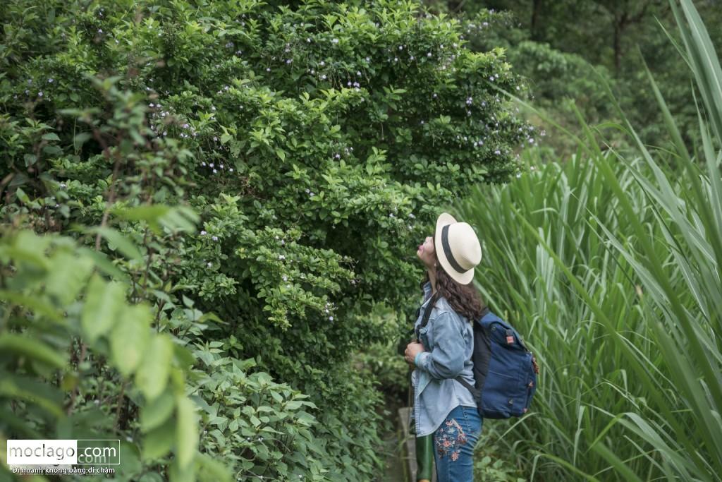 putaleng 22 1024x683 - Những đỉnh núi đẹp nhất Việt Nam| Phần 2| Putaleng khu rừng cổ tích ở Lai Châu
