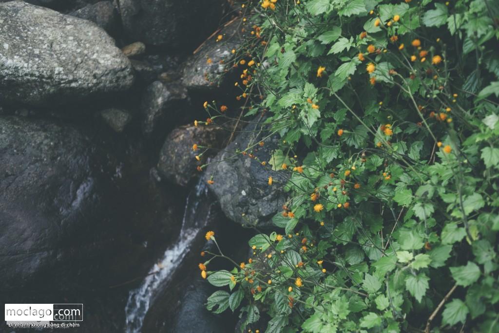 putaleng 34 1024x684 - Những đỉnh núi đẹp nhất Việt Nam| Phần 2| Putaleng khu rừng cổ tích ở Lai Châu