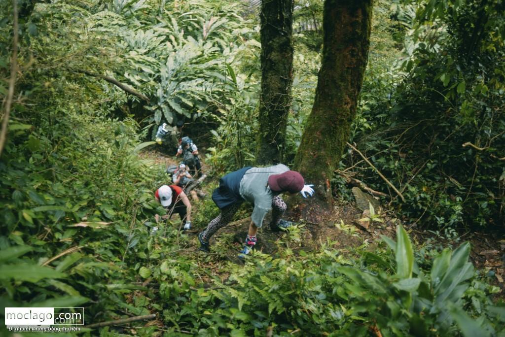 putaleng 37 1024x684 - Những đỉnh núi đẹp nhất Việt Nam| Phần 2| Putaleng khu rừng cổ tích ở Lai Châu