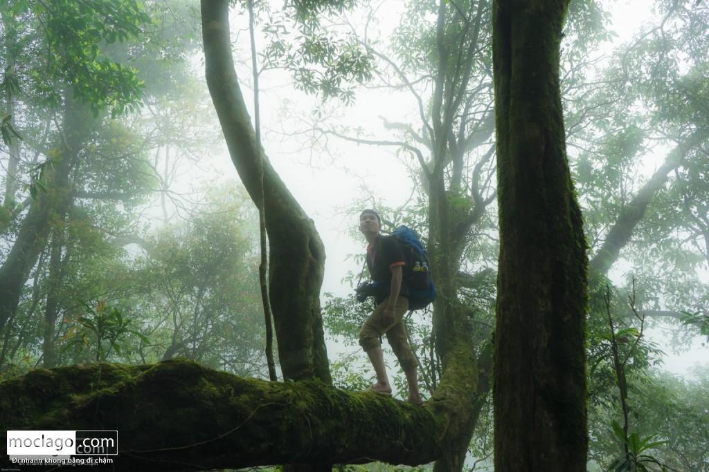 putaleng 38 1024x683 - Những đỉnh núi đẹp nhất Việt Nam| Phần 2| Putaleng khu rừng cổ tích ở Lai Châu