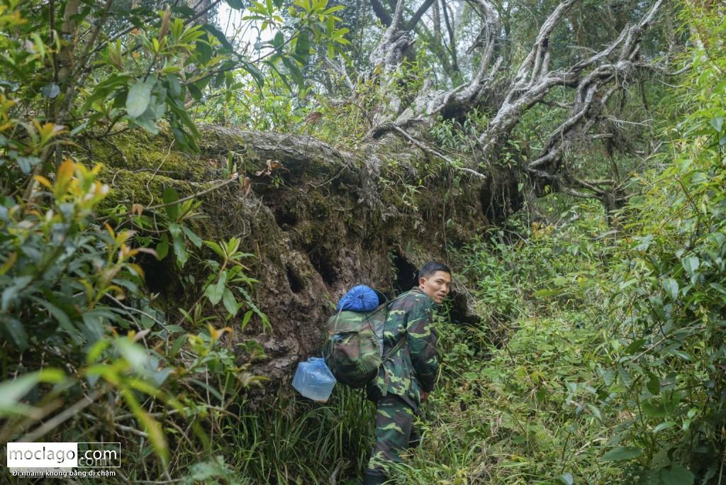 putaleng 61 1024x684 - Những đỉnh núi đẹp nhất Việt Nam| Phần 2| Putaleng khu rừng cổ tích ở Lai Châu