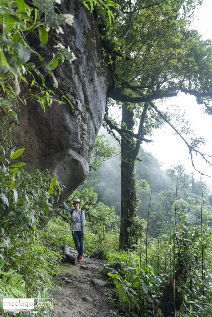 putaleng 66 - Những đỉnh núi đẹp nhất Việt Nam| Phần 2| Putaleng khu rừng cổ tích ở Lai Châu