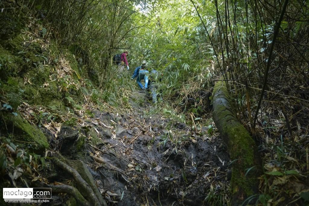 putaleng 77 1024x683 - Những đỉnh núi đẹp nhất Việt Nam| Phần 2| Putaleng khu rừng cổ tích ở Lai Châu