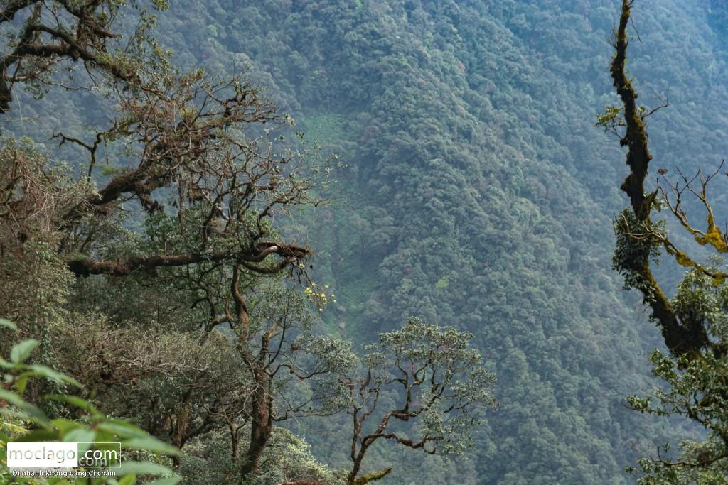 putaleng 83 1024x683 - Những đỉnh núi đẹp nhất Việt Nam| Phần 2| Putaleng khu rừng cổ tích ở Lai Châu