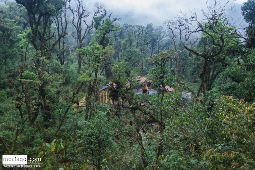 putaleng 84 1024x684 - Những đỉnh núi đẹp nhất Việt Nam| Phần 2| Putaleng khu rừng cổ tích ở Lai Châu