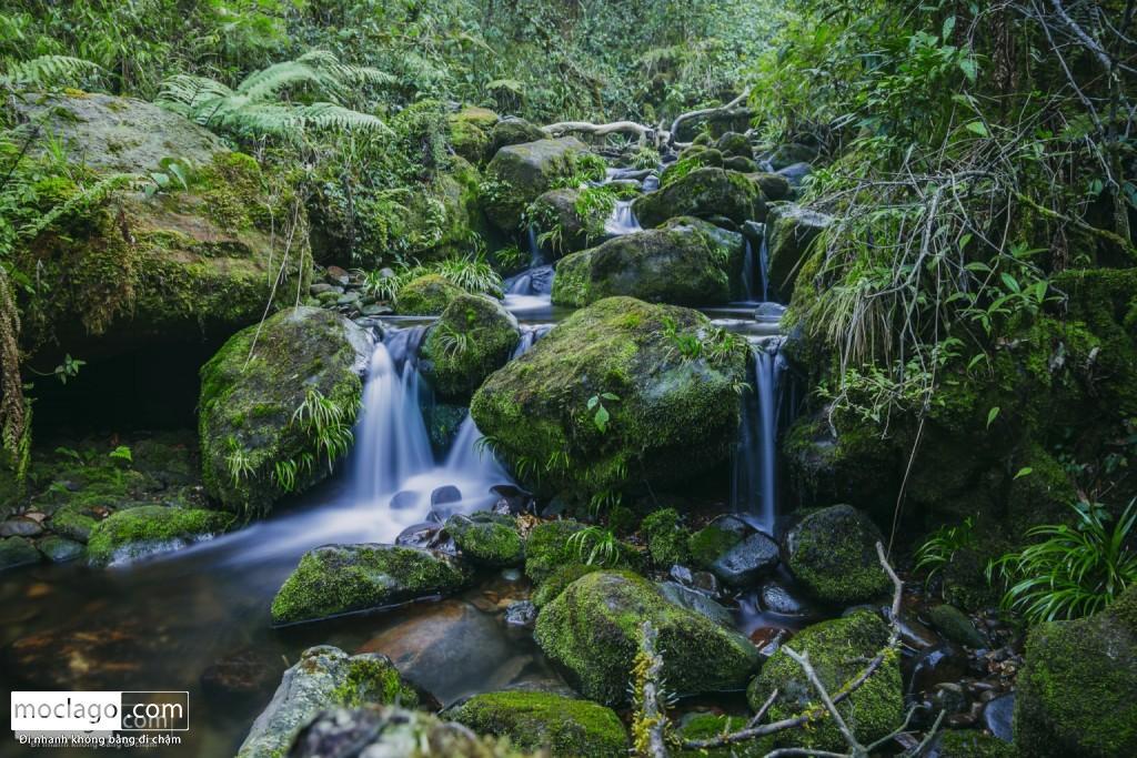 putaleng 87 1024x683 - Những đỉnh núi đẹp nhất Việt Nam| Phần 2| Putaleng khu rừng cổ tích ở Lai Châu