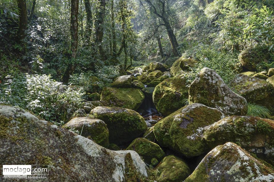 moclago putaleng 11 - Những đỉnh núi đẹp nhất Việt Nam| Phần 2| Putaleng khu rừng cổ tích ở Lai Châu