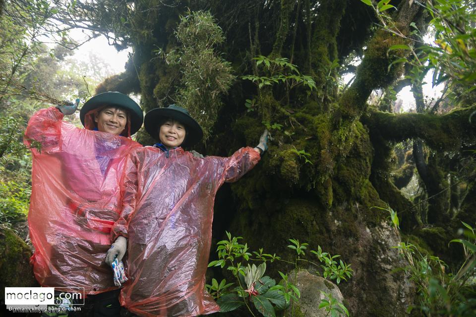 moclago putaleng 2 - Những đỉnh núi đẹp nhất Việt Nam| Phần 2| Putaleng khu rừng cổ tích ở Lai Châu