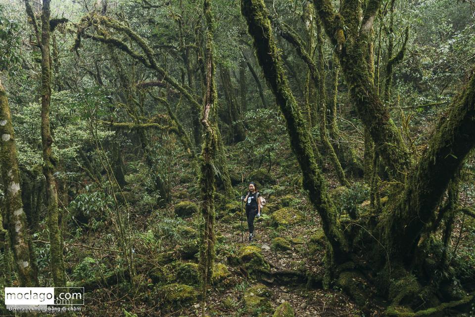 moclago putaleng 20 - Những đỉnh núi đẹp nhất Việt Nam| Phần 2| Putaleng khu rừng cổ tích ở Lai Châu