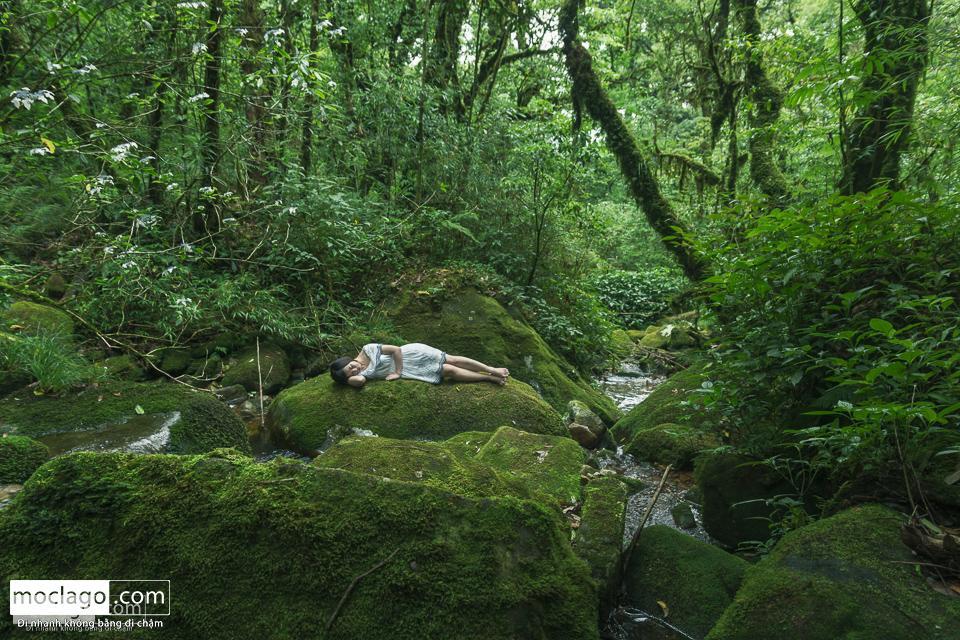 moclago putaleng 34 - Những đỉnh núi đẹp nhất Việt Nam| Phần 2| Putaleng khu rừng cổ tích ở Lai Châu