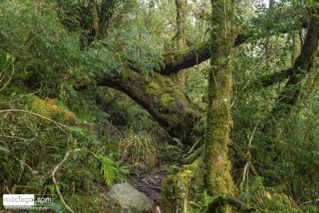 putaleng 91 1024x684 - Những đỉnh núi đẹp nhất Việt Nam| Phần 2| Putaleng khu rừng cổ tích ở Lai Châu