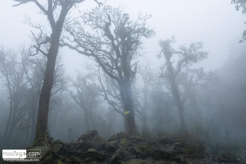 putaleng 92 1024x683 - Những đỉnh núi đẹp nhất Việt Nam| Phần 2| Putaleng khu rừng cổ tích ở Lai Châu