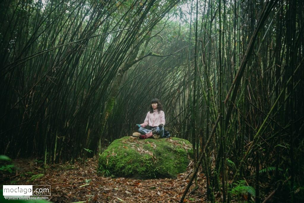 putaleng 95 1024x683 - Những đỉnh núi đẹp nhất Việt Nam| Phần 2| Putaleng khu rừng cổ tích ở Lai Châu