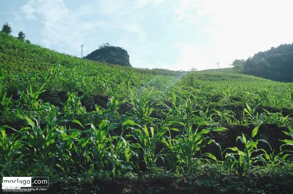 DSCF1387 1024x680 - Hà Giang mùa xanh - tháng 4, tháng 5, tháng 6
